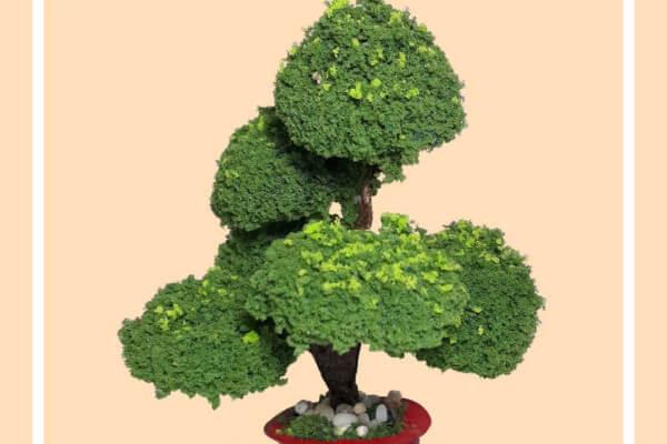 Chậu cây cảnh – Mô Hình Sài Gòn Xưa