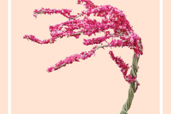 Cây hoa giấy – Mô Hình Sài Gòn Xưa